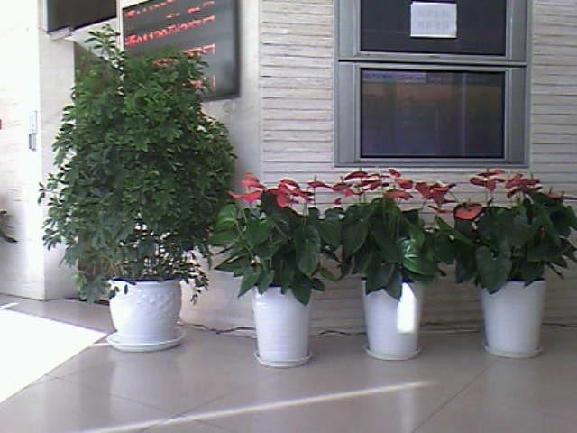 【室内花卉租摆办公室绿植租赁价格