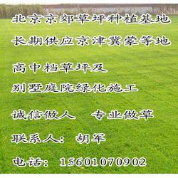 北京高尔夫球场草坪销售高尔夫草坪价格果岭草坪基地