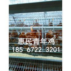 山西青年鸡养殖基地