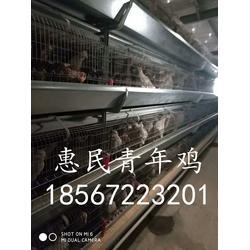 鹤壁青年鸡超市海兰褐青年鸡超市60天青年鸡超市