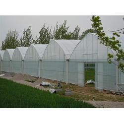 河南连栋薄膜温室大棚设计建造